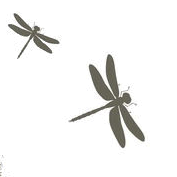 dragonflies.png